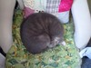Ammonitequ