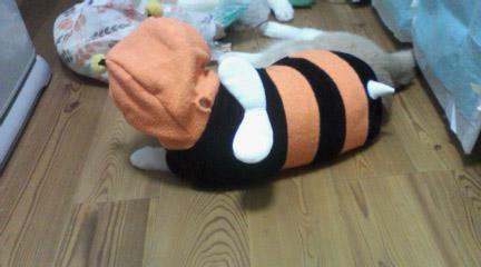 とんちゃんハチになる?