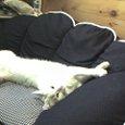 ソファーは伸びて使うもの