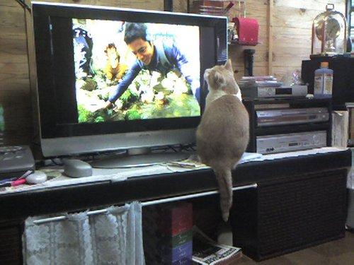 トムとテレビ