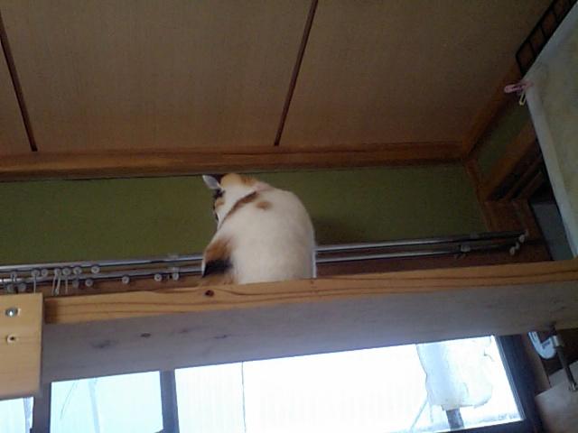 Aa_yumega